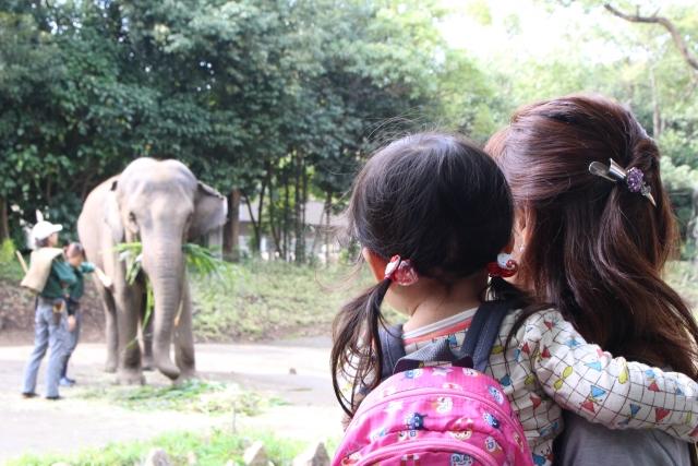 動物園は何歳からデビューさせる?年齢別の子供との楽しみ方と注意点